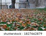 Falling Brown Leaves Of Big...