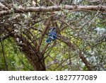 Beautiful Blue Bird Perched On...