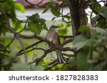 Beautiful Bird Resting On A...