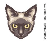 Beautiful Siamese Cat Face  For ...