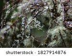 Close Up Of Moss Grown In Tree...