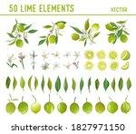 vintage lime design elements.... | Shutterstock .eps vector #1827971150