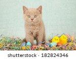 Easter Kitten With Easter Eggs...