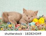 Easter Kitten With Easter Eggs  ...