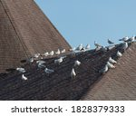 Seagulls On A Roof Top