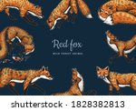 Wild Red Fox Poster Or Banner....