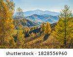Autumn View. Yellow Trees On...