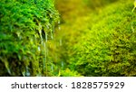 Green Moss Wall In Iceland With ...