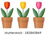 Set Of Multicolor Tulips In...