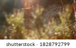 Spider Web On The Grass With...