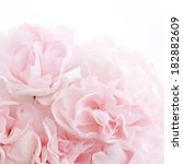 Stock photo pink carnation flowers 182882609