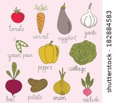 bright vegetables in vector set....