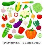 vegetables vector illustration... | Shutterstock .eps vector #1828862480