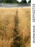 Small photo of A path trodden in the tall grass in a wild meadow. National Park Stolowe Mountains in Poland, Europe.