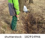 collecting birch sap from tree... | Shutterstock . vector #182914946