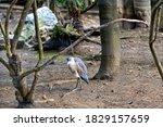 A Grey Heron In A Zoo