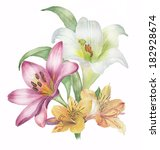 lily flowers    Shutterstock . vector #182928674