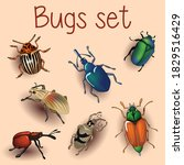 Beetle  Set With Beetles ...