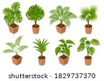 isometric plant  palm trees in... | Shutterstock .eps vector #1829737370