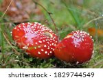 Beautiful Toadstools In The...