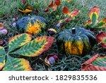 Autumn Season. Two Decorative...