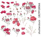 collection of vector pink rose... | Shutterstock .eps vector #1829918066
