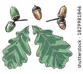 hand drawn oak leaves and acorns | Shutterstock .eps vector #1829981846