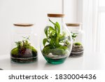 Small Decoration Plants In A...