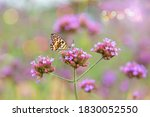 purple flowers in the middle of ... | Shutterstock . vector #1830052550