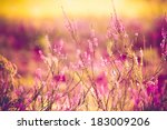close up of purple heather   Shutterstock . vector #183009206