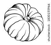 Hand Drawn Pumpkin Sketch...