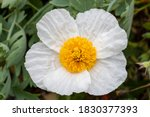 Close Up Of Single White Flower ...