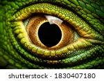 Macro Shot Of A Green Iguana's...