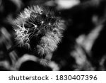 Black And White Image Of Fluff...