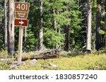 National Forest Road  Chipmunk...