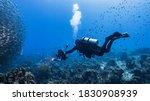 Professional Diver   Underwater ...