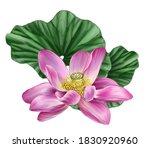 Pink Lotus Flower. Large Green...