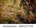 Delicate Grass Seeds In Winter