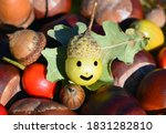 Colorful Autumn   Chestnuts ...