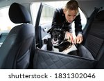 Woman Fastening Dog In Car With ...