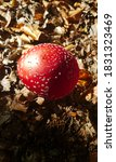 Red Mushroom In Autumn Forest....