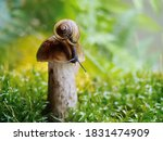 Snails Journey In The Forest