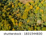 Aerial Drone View Of A Beech...