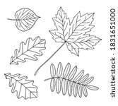 hand drawn leaves of linden ... | Shutterstock .eps vector #1831651000