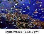 underwater image of reef and... | Shutterstock . vector #18317194
