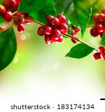 coffee plant. red coffee beans... | Shutterstock . vector #183174134