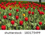 view over a beautiful large red ... | Shutterstock . vector #183175499