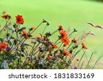 Wildflowers On A Green...