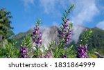 beautiful purple flowers on a... | Shutterstock . vector #1831864999
