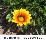 Colorful Flower Head Of...